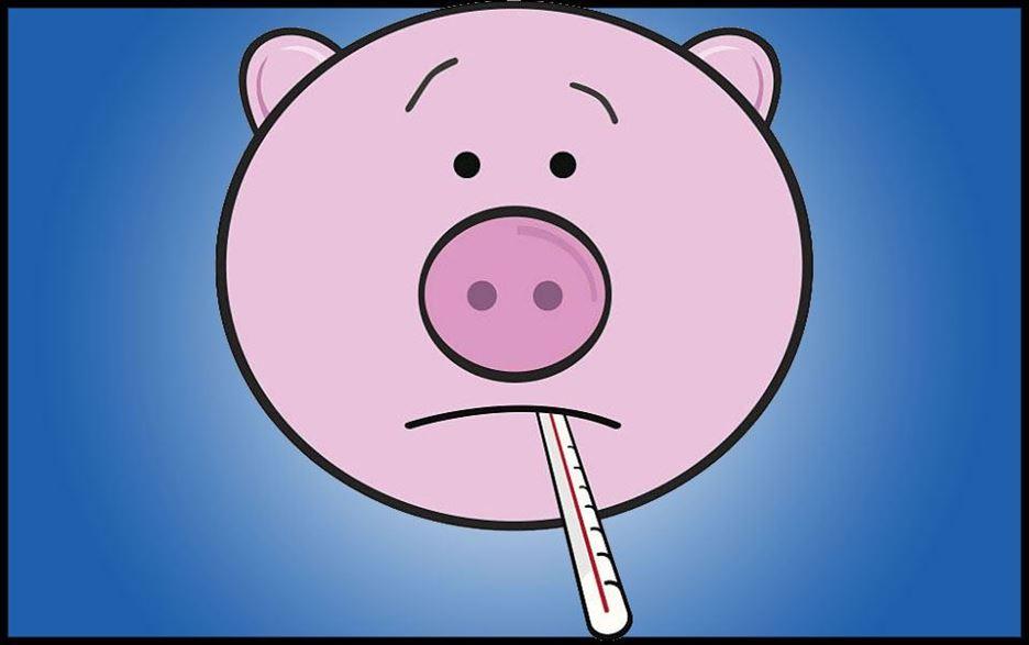 Nowe przypadki afrykańskiego pomoru świń w Polsce